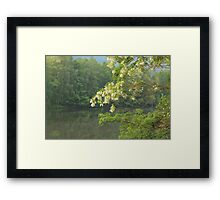 blooming tree by the water Framed Print