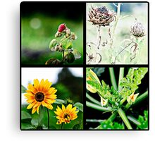 Wild fruit and flowers Canvas Print