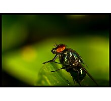 fly On A Leaf #2 Photographic Print