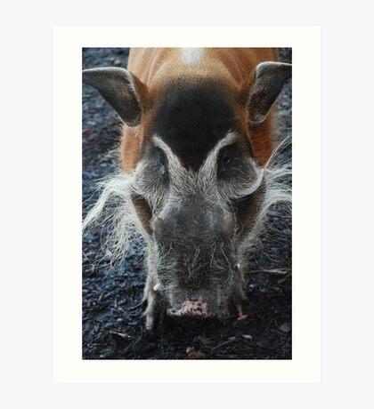Warthog Chester Zoo Art Print
