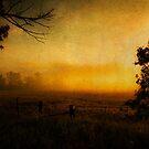 Misty Golden Morning by JKKimball