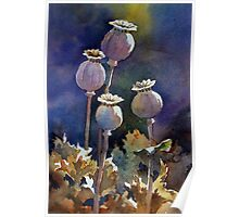 Poppy Seed Heads Poster