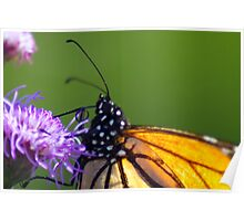 Really close view of Monarch Butterfly Poster