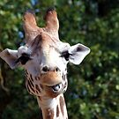 Giraffe Smile by John Dalkin