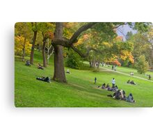 Enjoying Autumn Colours on a Slope in High Park Metal Print