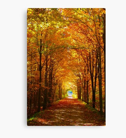 Autumn Light and Leaf Painting Canvas Print