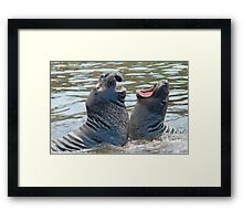 Confrontation / Conflict. Elephant Seals Reserve, San Simeon, CA Framed Print
