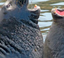 Confrontation / Conflict. Elephant Seals Reserve, San Simeon, CA Sticker