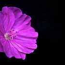 Cranesbill by André Barker