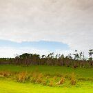 Big Cypress Preserve 1 by Carson Wilcox