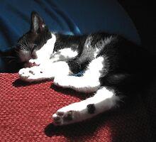 Sleeping kitten by Jo-Lou