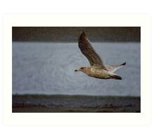 "gull flying, ""acrylic"" photography Art Print"