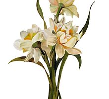 Double Narcissi In A Bouquet Isolated by taiche