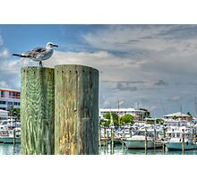 Seagull at the marina in Nassau, The Bahamas Photographic Print
