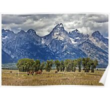 Teton Mountains and Horses Poster