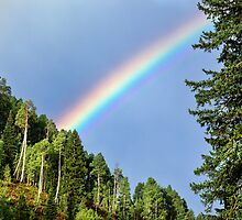 Forest Rainbow by Matt Suess