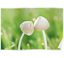 Fungi Romance Poster