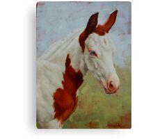 Pretty Baby-Paint Foal Portrait Canvas Print