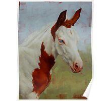 Pretty Baby-Paint Foal Portrait Poster