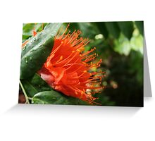 Pointy Red Flower Greeting Card