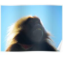 Baboon Poster