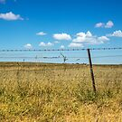 Blue and Gold and a Simple Fenceline by Clare Colins