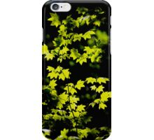 sunny backlit maple leaves iphone cover iPhone Case/Skin