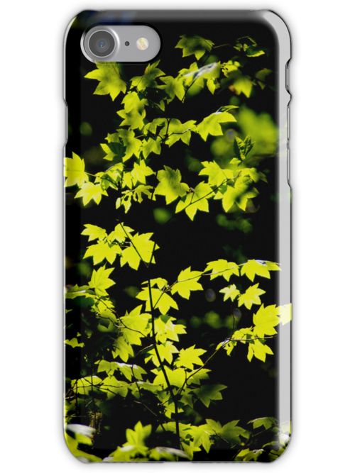 sunny backlit maple leaves iphone cover by dedmanshootn