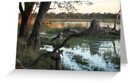 Waterhole at Sunset by Peter Edwards