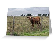 Da Brown Cow Greeting Card