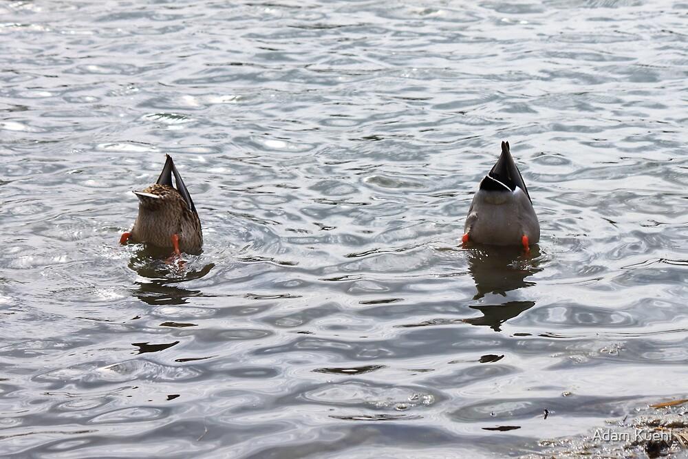 Synchronized Swimming by Adam Kuehl