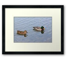 Another After Meal Swim Framed Print
