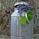 Vintage Grapes by Maria Dryfhout