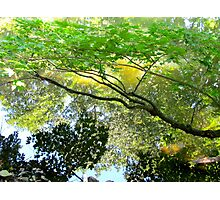 Reflections of Summer Photographic Print
