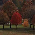 Fall Reds by Adam Kuehl