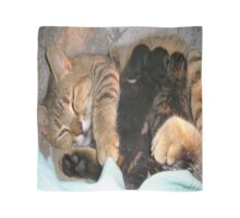 Mother Tabby Cat Suckling Four Newborn Kittens Scarf