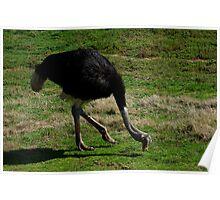 Ostrich - Shall We Dance? Poster