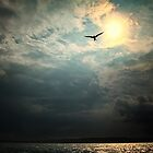 Bird in Sky by odessit40