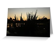 Foliage in a Sunset Greeting Card