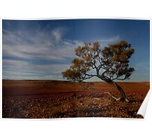 Lone tree in a stony gibber landscape. Poster
