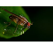 Fly On A Leaf #3 Photographic Print