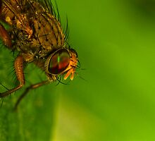 Fly On A Leaf #4 by Kerrod Sulter