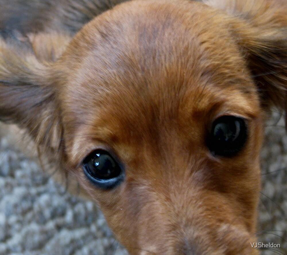 Puppy Eyes by VJSheldon