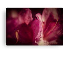 Flowerscapes - Purple Macro Canvas Print
