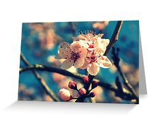 Blue Sky and Spring Blossoms Greeting Card
