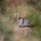 On The Nest by byronbackyard