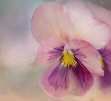 precious pansies by Teresa Pople