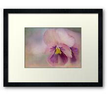 precious pansies Framed Print