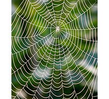 Playing with spiders Photographic Print