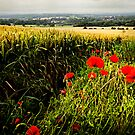 Poppies and Wheat by Drew Walker